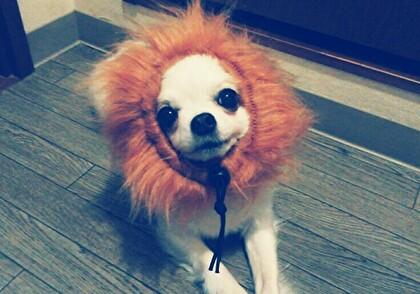 ライオンさくら5