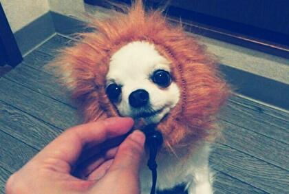 ライオンさくら6