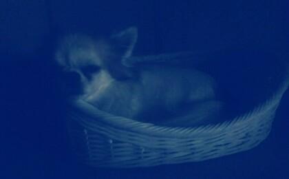 眠るハヤテ2