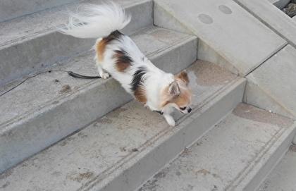 階段を降りるハヤテ