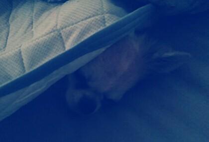 2度寝中のハヤテ2
