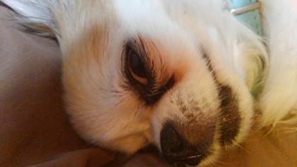 寝てるハヤテ2