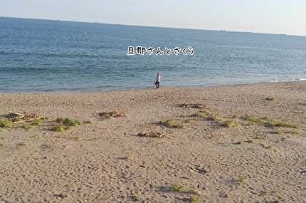 海を散歩してる旦那さんとさくら