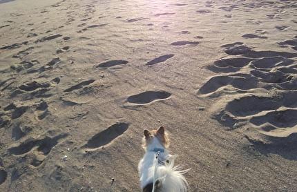 海を散歩するハヤテ6