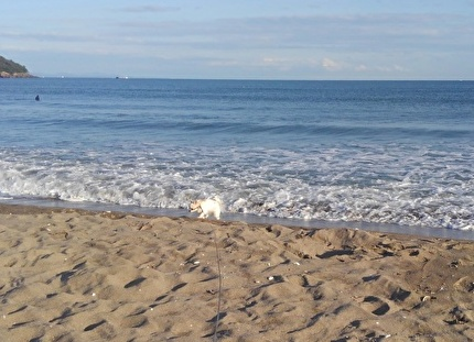 海とさくら