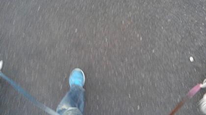 散歩中のチワワーズ7
