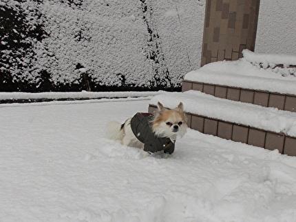 雪とハヤテ