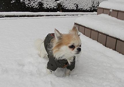 雪とハヤテ2