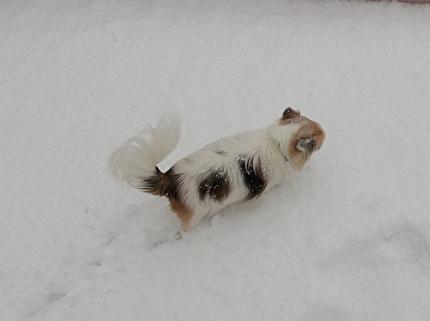 雪道を散歩するハヤテ