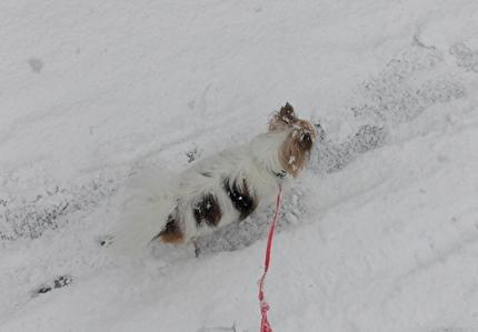 雪道を散歩するハヤテ5
