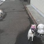 雪ダルマとチワワーズ2
