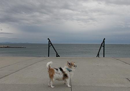 海とハヤテ