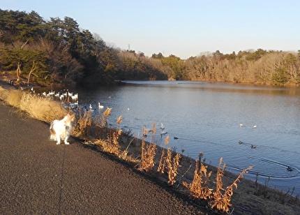 白鳥を見るハヤテ3