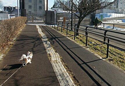 散歩してるハヤテ2