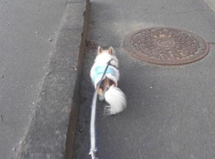 散歩するハヤテ2