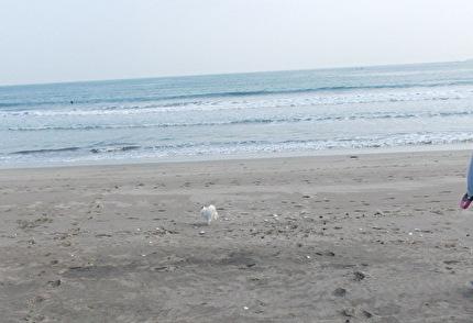砂浜を走るさくら3