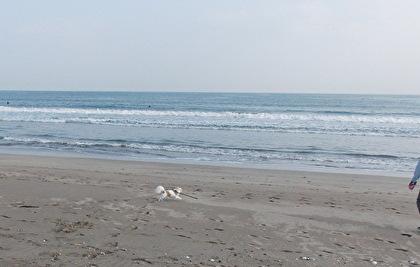 砂浜を走るさくら4