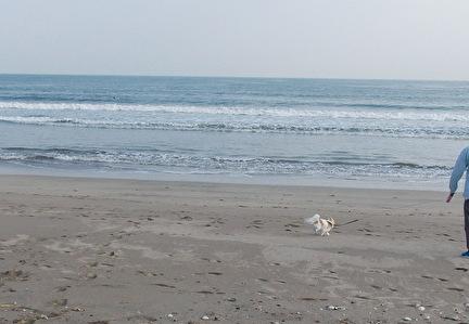 砂浜を走るさくら5