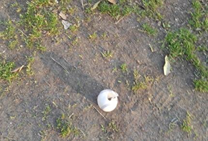 落ちてたボール
