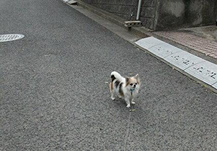 大きな犬にビビるハヤテ2