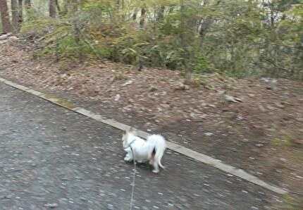 公園を走るハヤテ