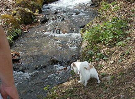 川を楽しむさくら2
