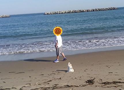 海とさくらと旦那さん2