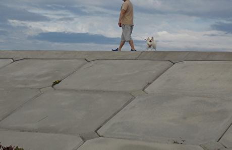 海を散歩するさくら3