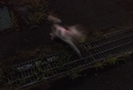 夜散歩のハヤテ3