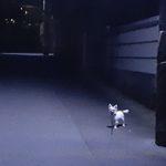 夜散歩のハヤテ