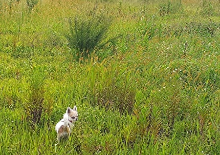 草むらの中のハヤテ2