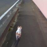 散歩するハヤテ