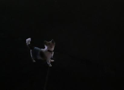 夜散歩のハヤテ2