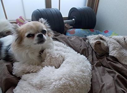 毛布とハヤテ