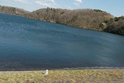 湖とさくら