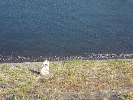 湖を眺めるさくら