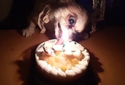 ケーキを食べるハヤテ